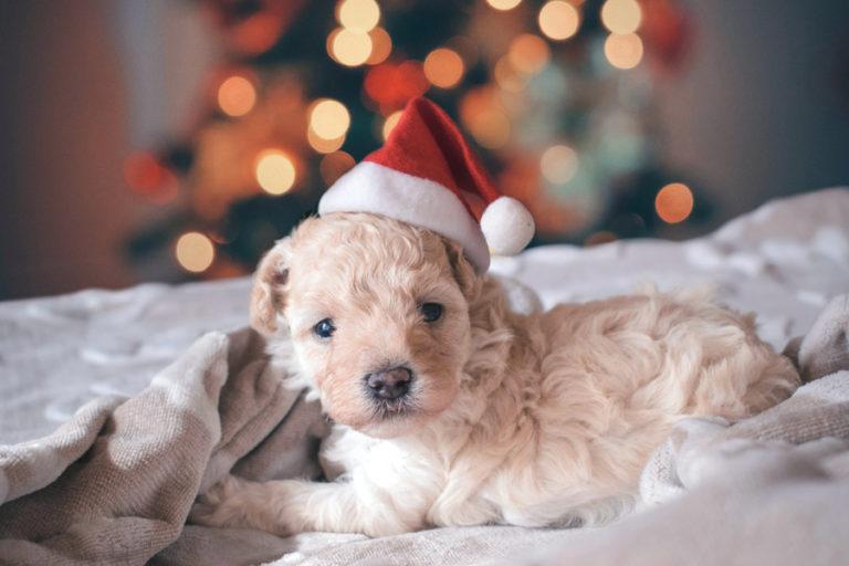 Weihnachtsgeschenke für den Hund – für tierische Freude unter dem Christbaum