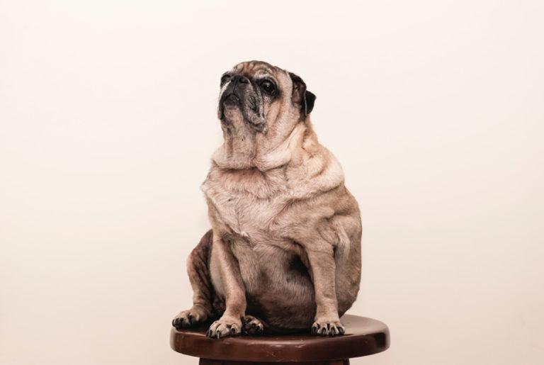 Hilfe! Mein Hund ist übergewichtig