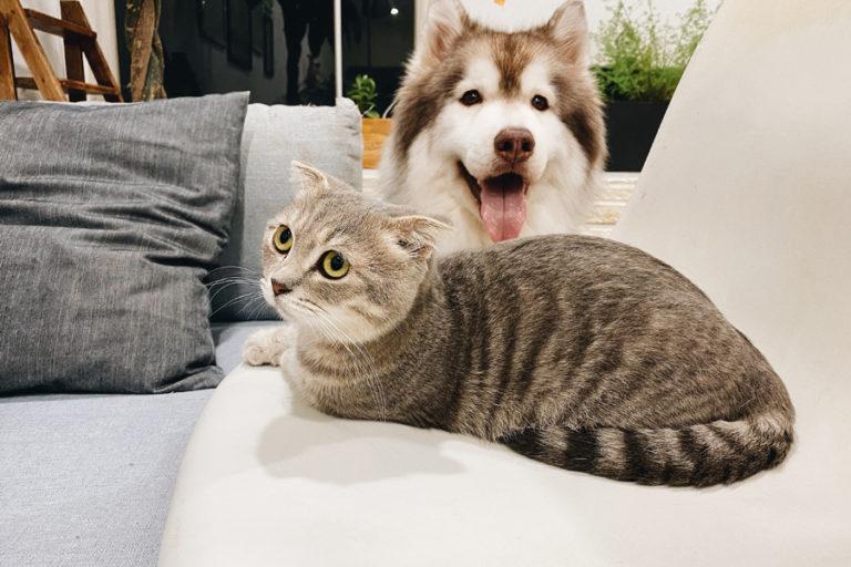 Den Hund an die Katze gewöhnen