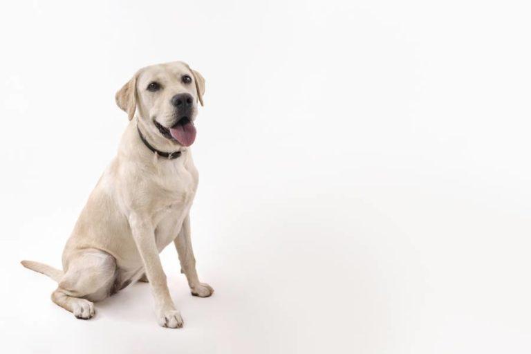 Xylit – gut für Menschen, tödlich für Hunde