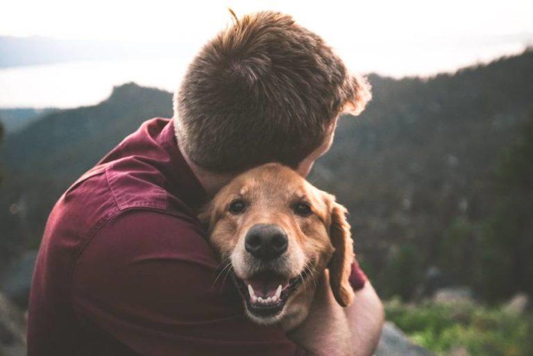 Gründe für einen Hund als Haustier