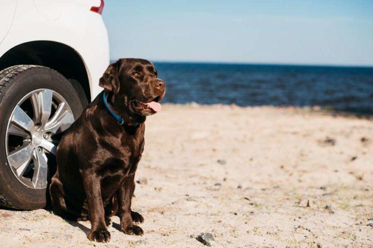 Urlaubsreisen und die richtige Medikation für Hunde