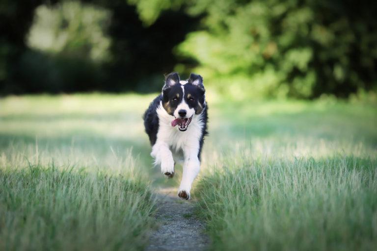 Freilauftraining für den Hund