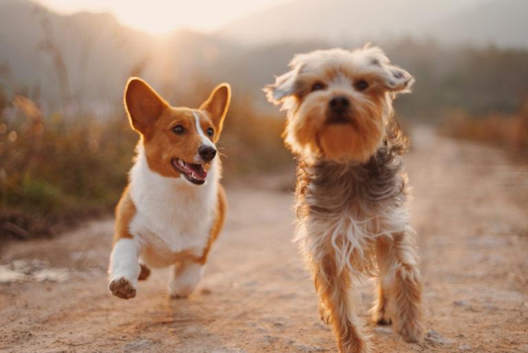Stressfreie Ausflüge mit dem Hund – 4 Tipps für Hund und Halter